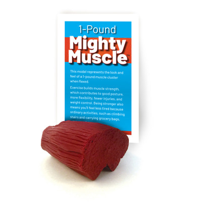 Mighty Muscle Model from Health Edco depicting 1 pound of flexed muscle that comes with informative tent card, 26021