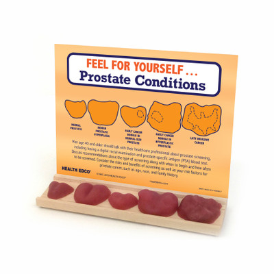 Feel for Yourself: Prostate Conditions Display for men's health education from Health Edco with five prostate models, 26807